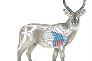 Waterbuck Diagram