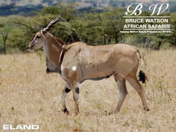 Eland Perfect Shot Rifle