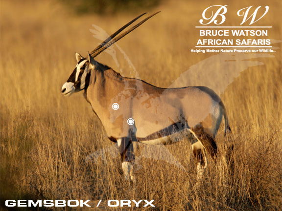 Gemsbok-Oryx Perfect Shot Rifle