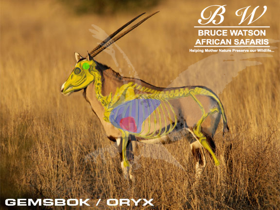 Gemsbok-Oryx Shot Placement