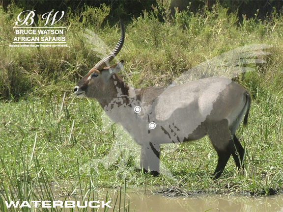 waterbuck perfect shot