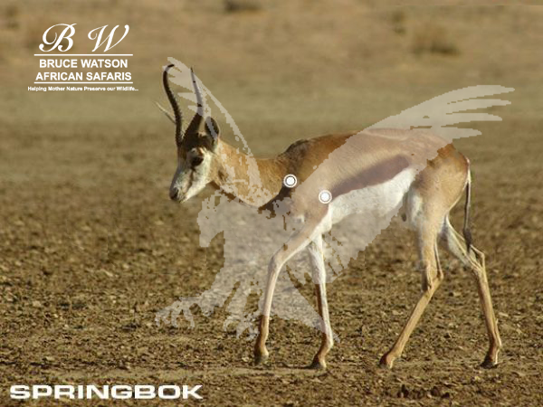 Springbok Perfect Shot