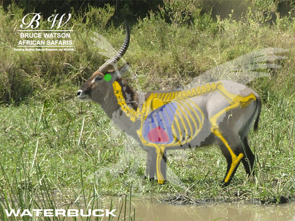 waterbuck_shot_placement